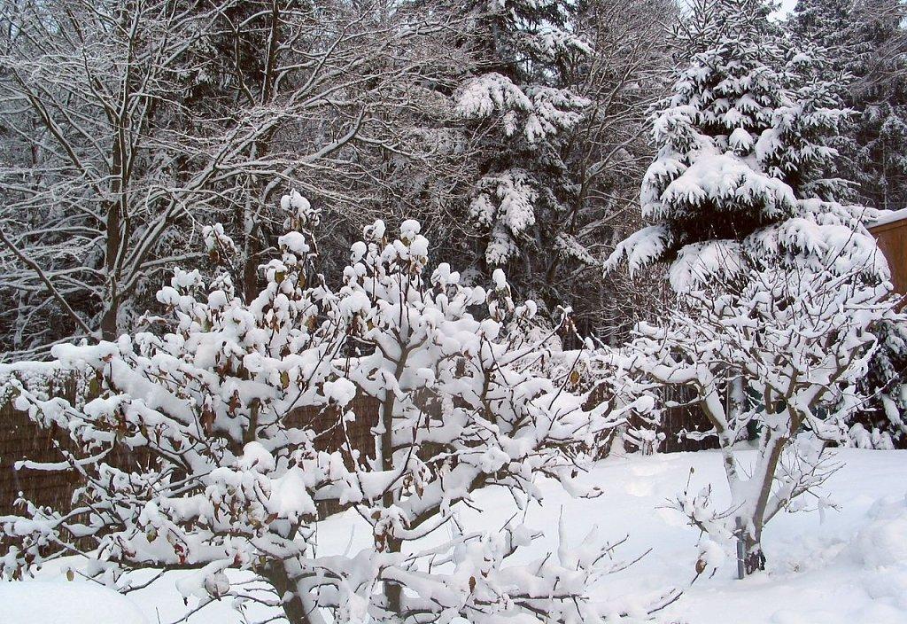 Nachts Frost, morgen im Westen Schneefall
